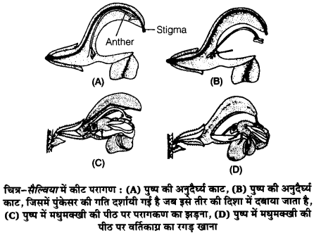 UP Board Solutions for Class 12 Biology Chapter 2 Sexual Reproduction in Flowering Plants 4Q.3