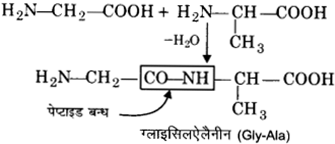 UP Board Solutions for Class 12 Chemistry Chapter 14 Biomolecules 10
