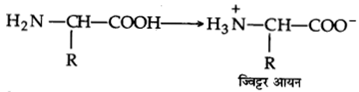 UP Board Solutions for Class 12 Chemistry Chapter 14 Biomolecules 11